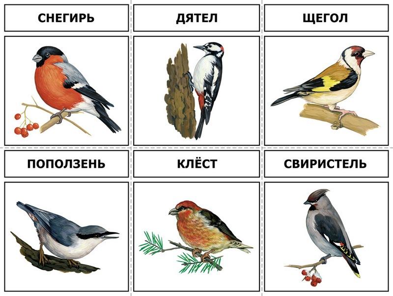 Картинки птицы зимующие в узбекистане