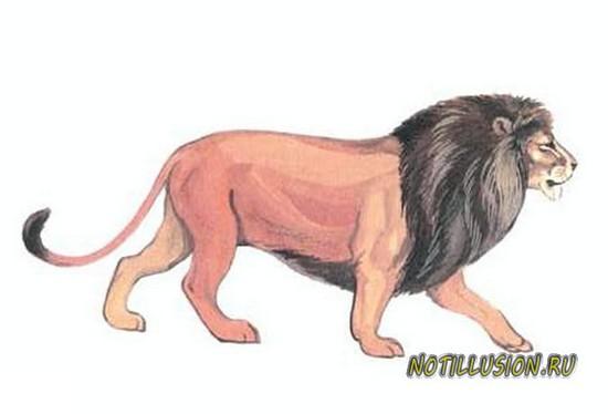 загадка про льва