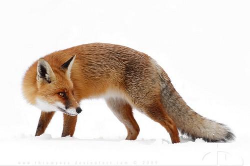 Проверь свою внимательность: сколько животных найдешь на картинке ... | 333x500