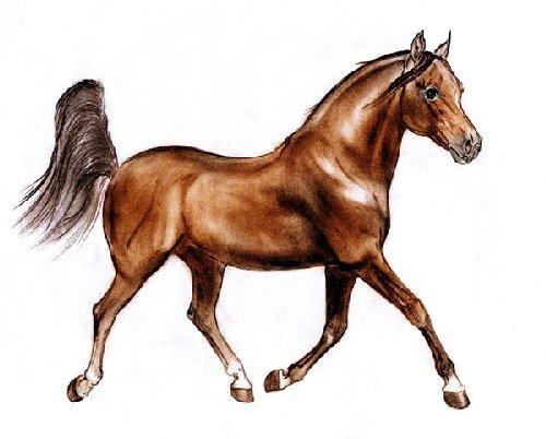 Домашние животные картинки лошадь для детского сада