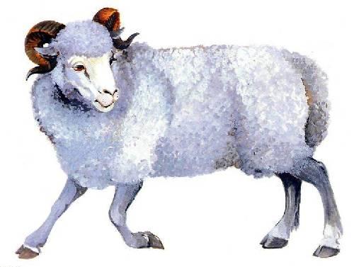 Найди животное: увлекательные снимки мастеров маскировки | 377x500