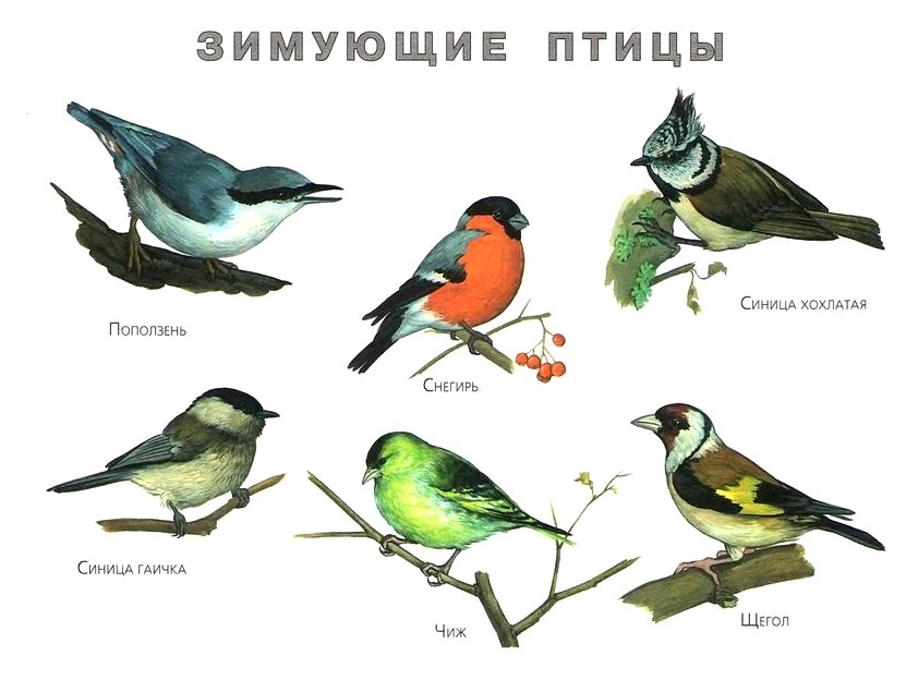 Картинки красивые про птиц