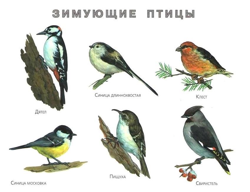 и названием картинками птицы с все